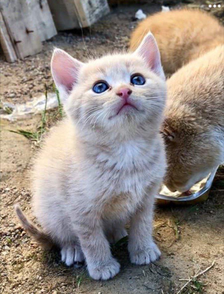 котёнок, кот, домашнее животное, дикое животное