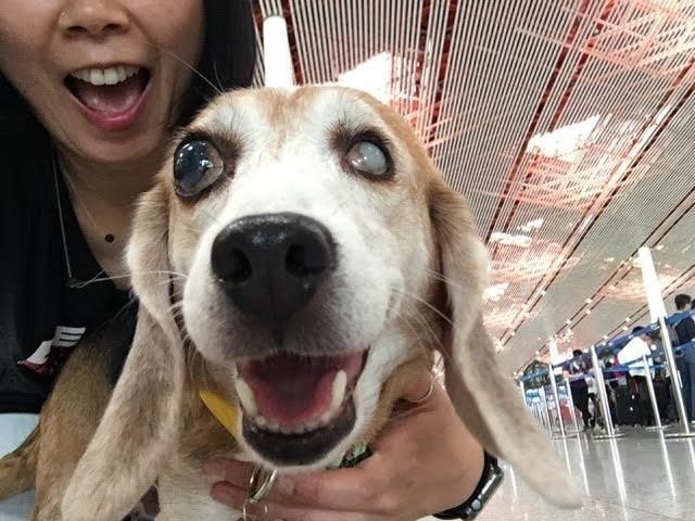 собака,пес,домашнее животное,эксперименты,требуется помощь