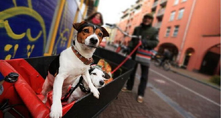собака, защита, нидерланды, домашнее животное, дикое животное