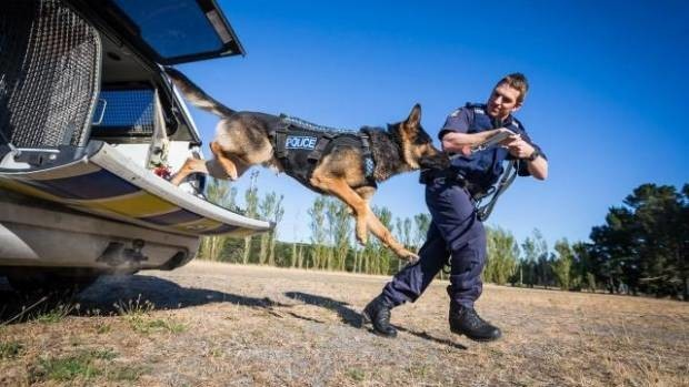 собака,пес,полиция,прыжки,домашнее животное