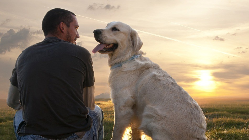 Собака и человек фото