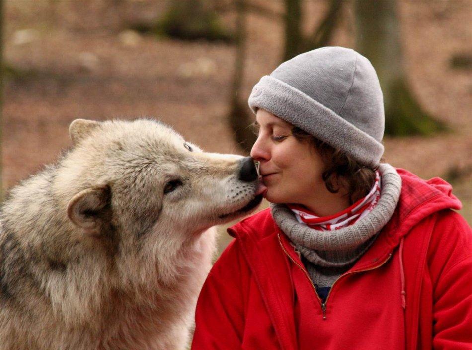 Волк и человек фото