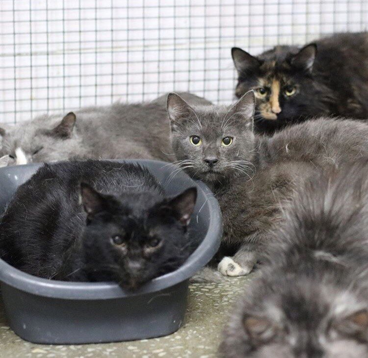 кот, кошка, домашнее животное, дикое животное