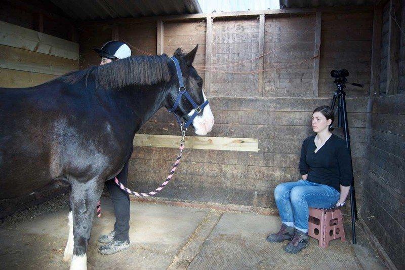 Лошади участвуют в эксперименте фото