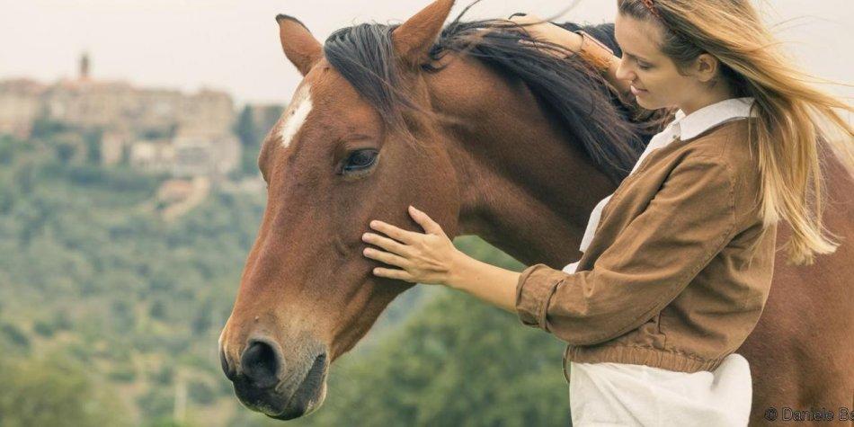 Лошади реагируют на выражение лица человека фото
