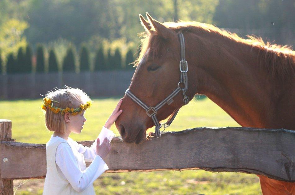 Лошадь и человек фото