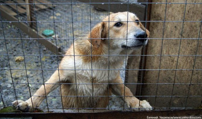 собака,пес,домашнее животное,требуется помощь,приют