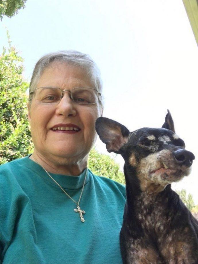 собака,пес,домашнее животное,требуется помощь,приют,питмоник