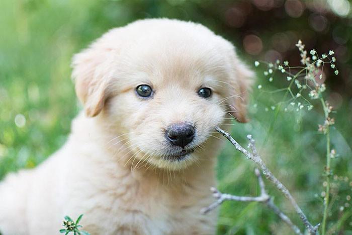собака,пес,щенок,домашнее животное,сюрприз,подарок
