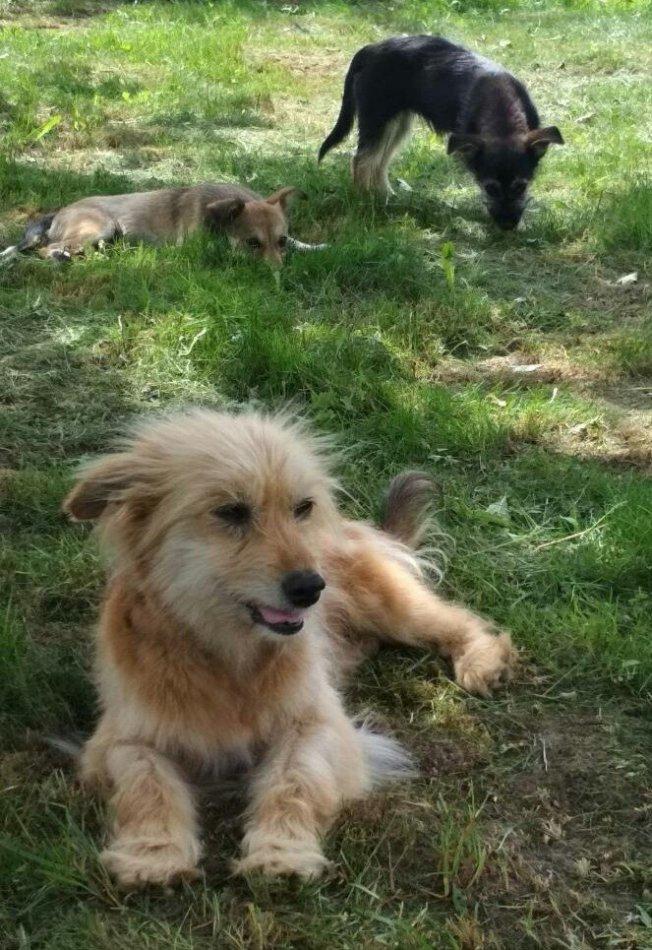 собака, домашнее животное, дикое животное