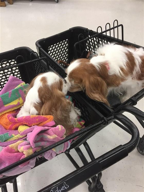 собака,пес,бездомное животное,инвалиды,поцелуй