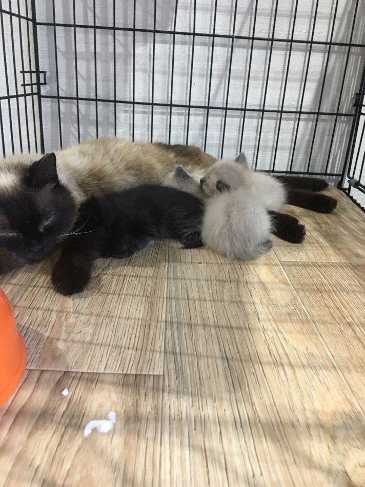 кот,кошка,питомец,бездомное животное