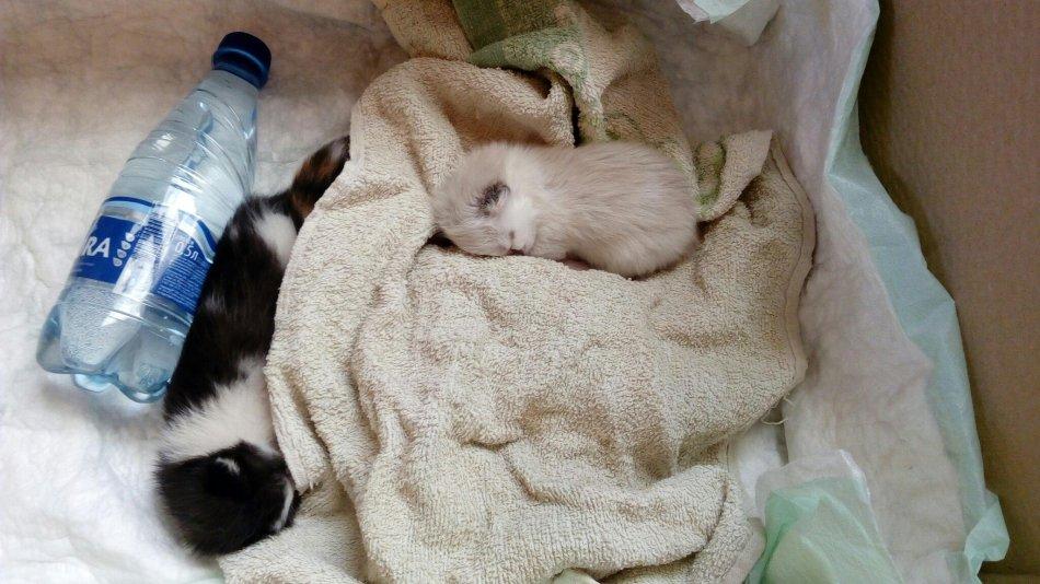 кот,кошка,котята,ищут новый дом