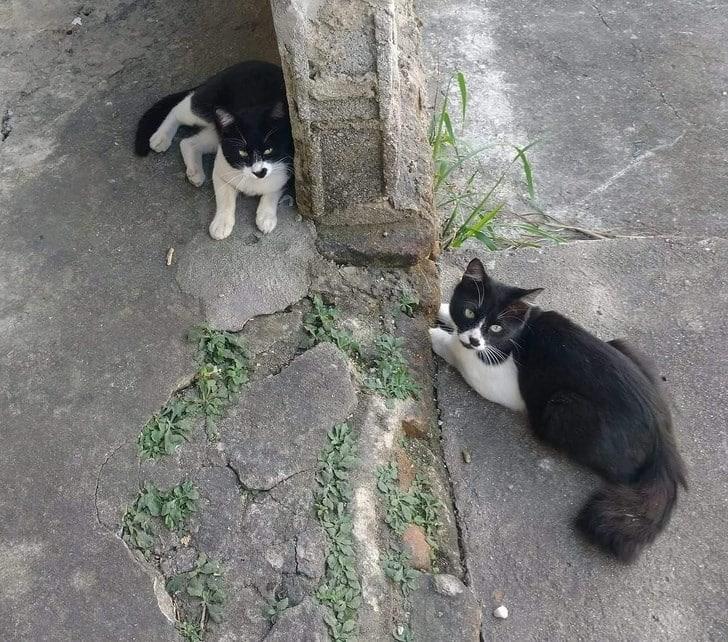 Одинаковые кошки