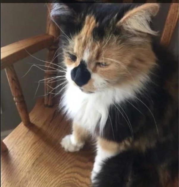 Кот с помятыми усами
