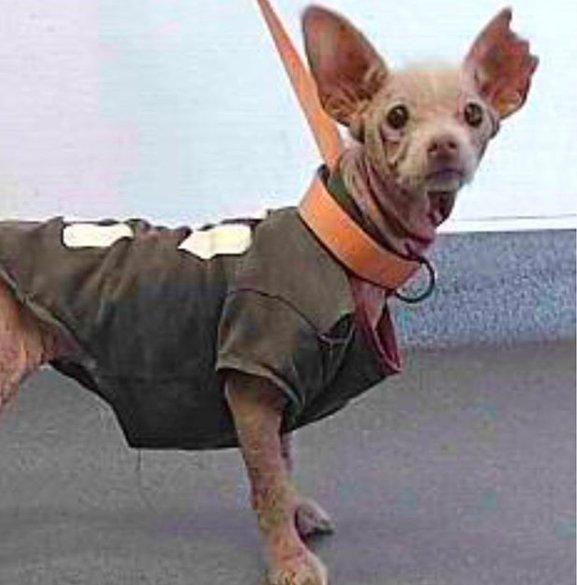 пес,собака,домашнее животное,требуется помощь,аллергия