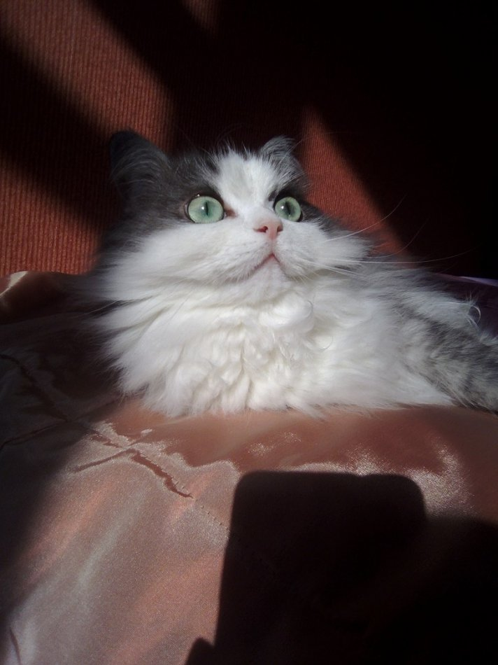 кот,кошка,питомец,домашнее животное