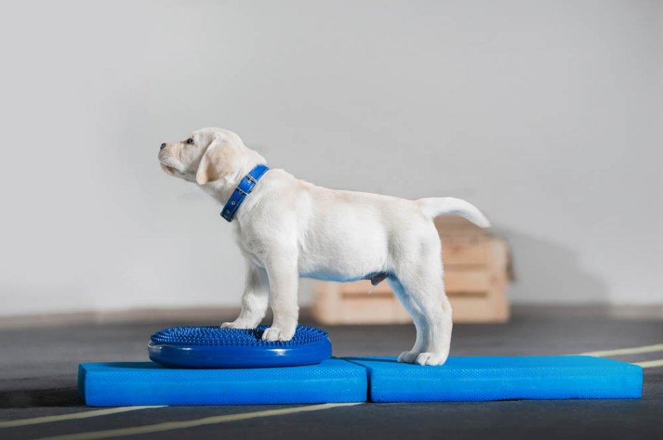 Фитнес для собак фото
