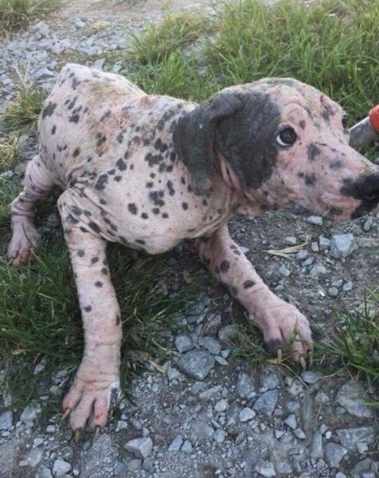 измученная собака