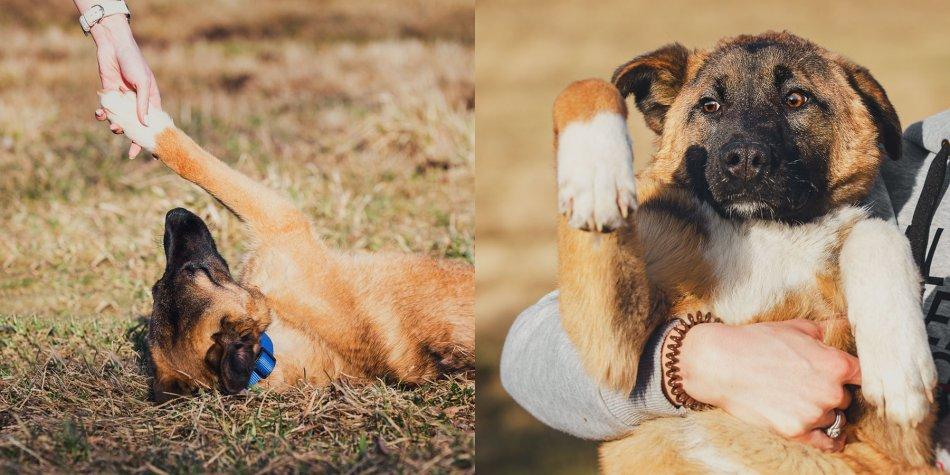 "Собака из приюта ""Home for dog"" фото"