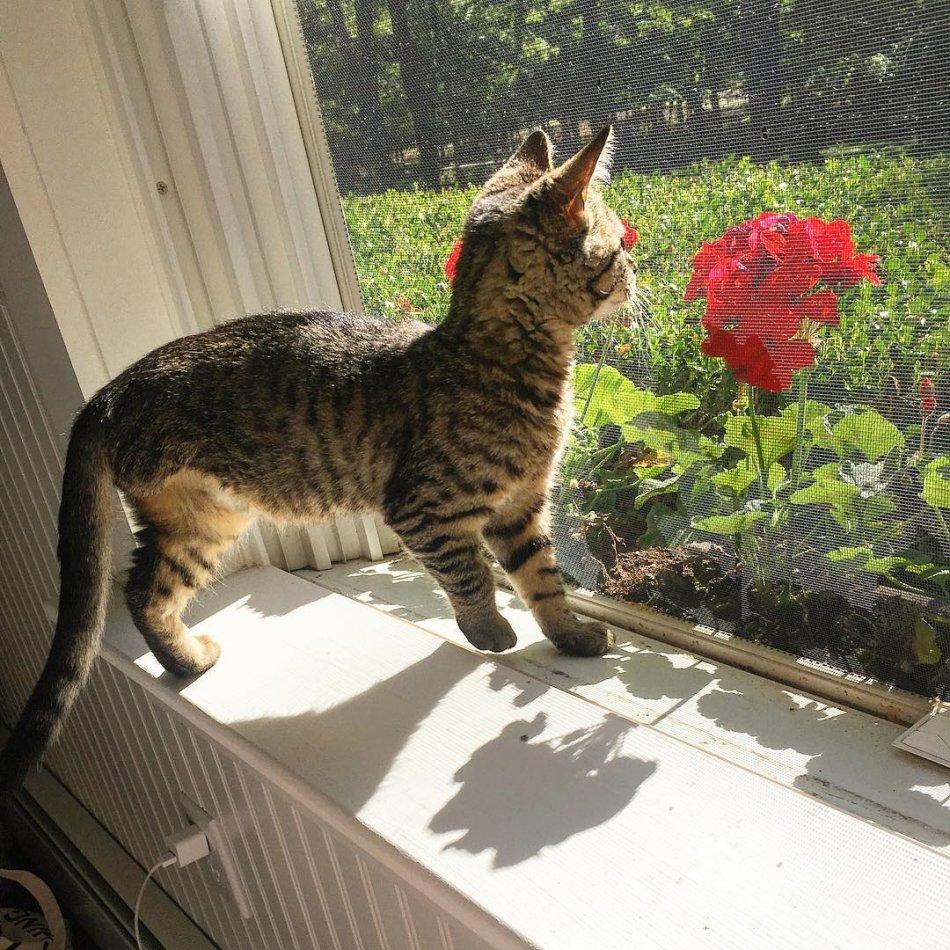 кошка, котёнок, домашнее животное, дикое животное