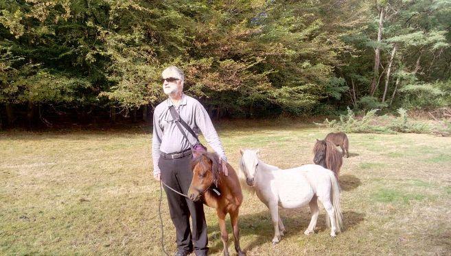 лошадь, пони, поводырь, домашнее животное, дикое животное