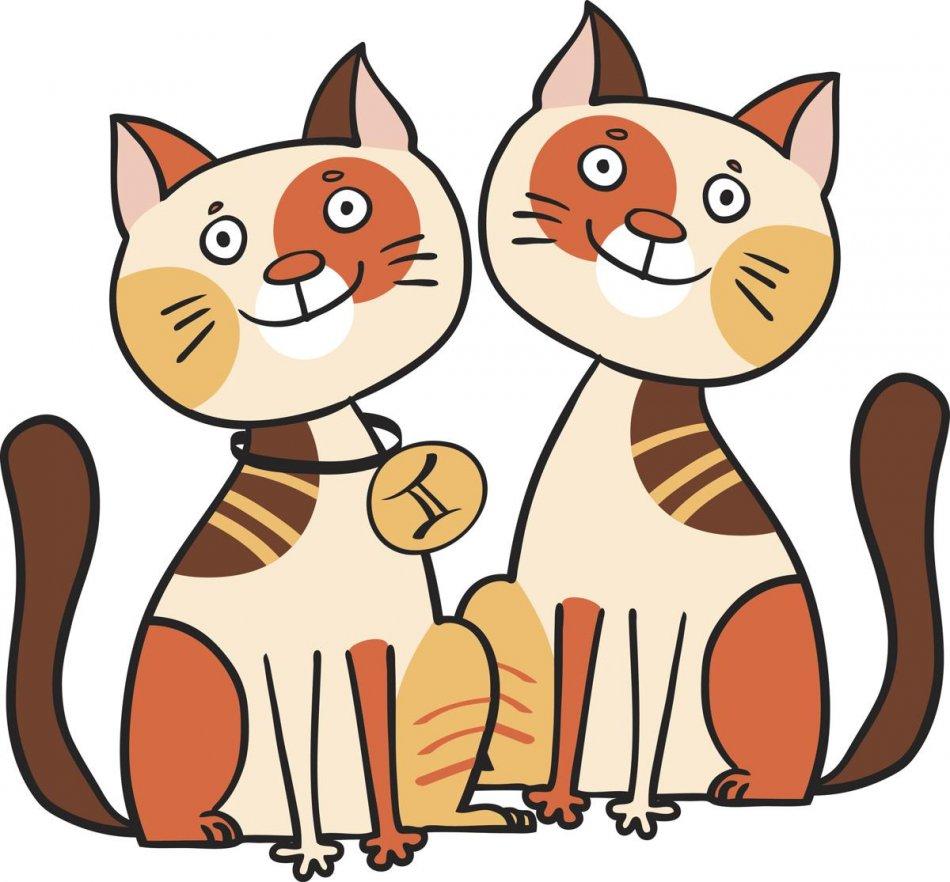 Кошка-Близнецы фото