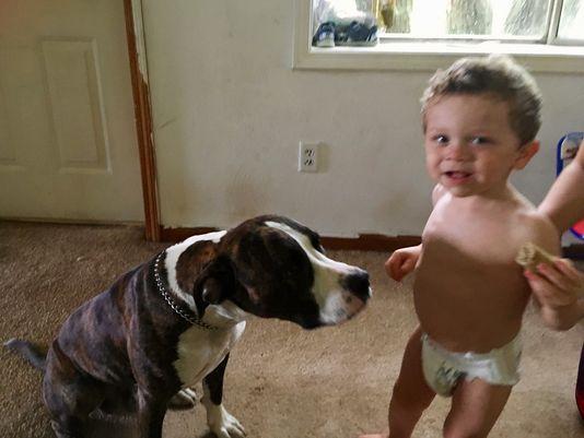 собака,пес,домашнее животное,ребенок