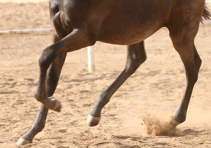 Ноги лошади фото
