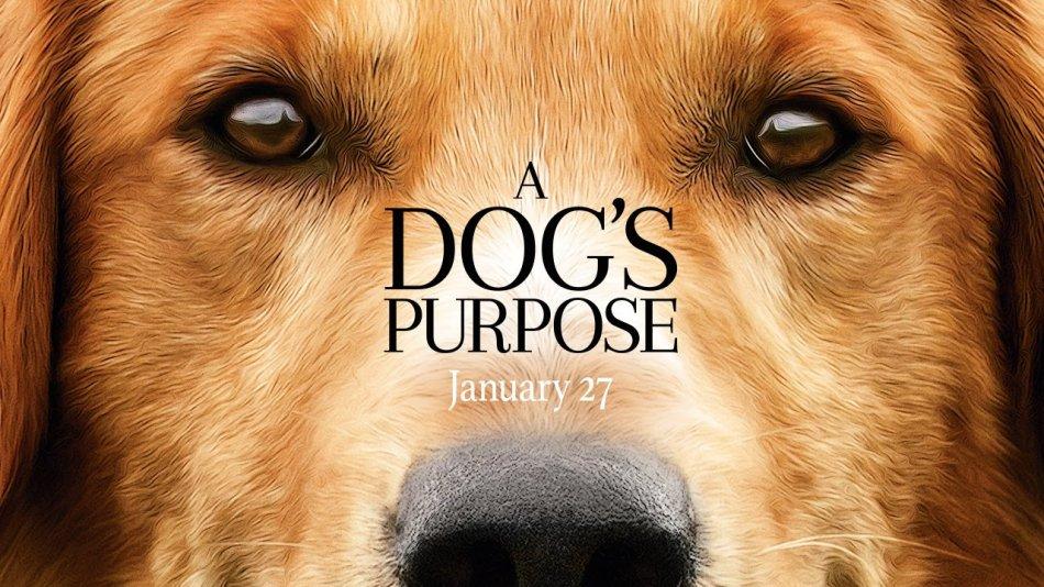Собака в кино фото