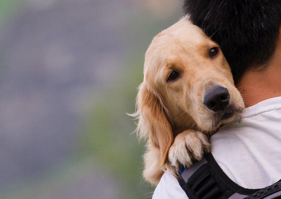 Человек обнимает собаку фото