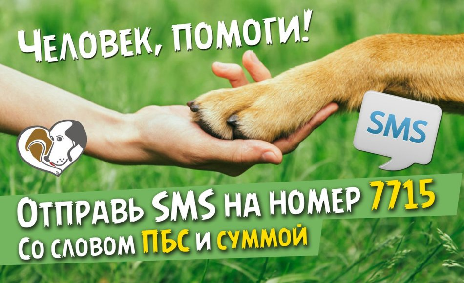 Трава, рука, собачья лапа, помощь
