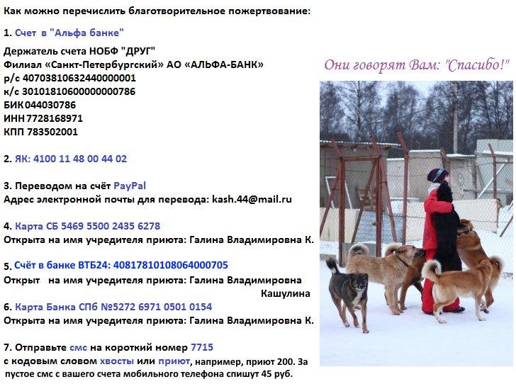 Приют, девушка в красном, собаки