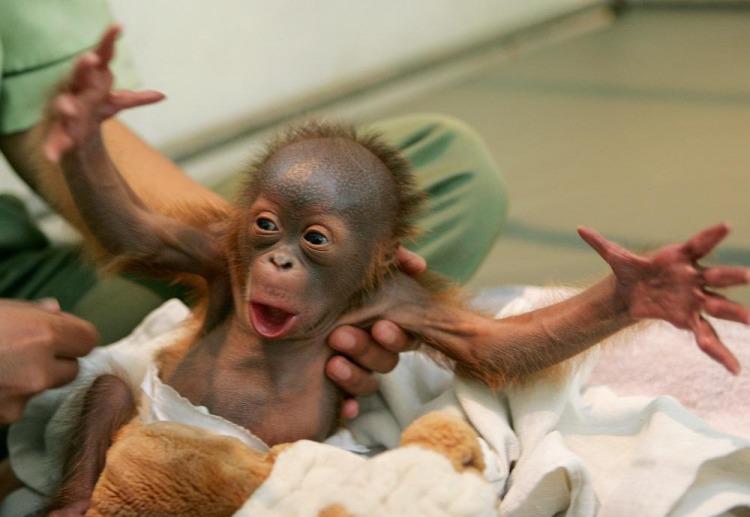 Малышка обезьянка