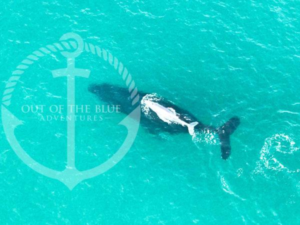 дельфин,море,вода