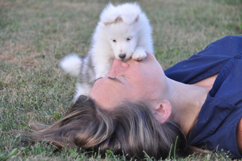 Одомашнивание собак фото