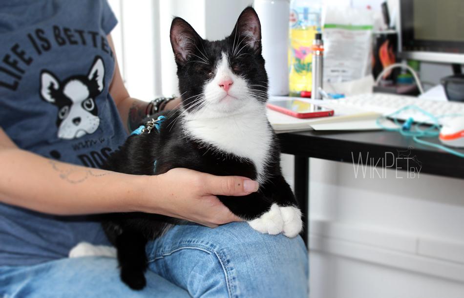 кошка, домашнее животное