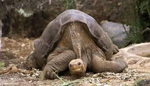 дикое животное, черепаха