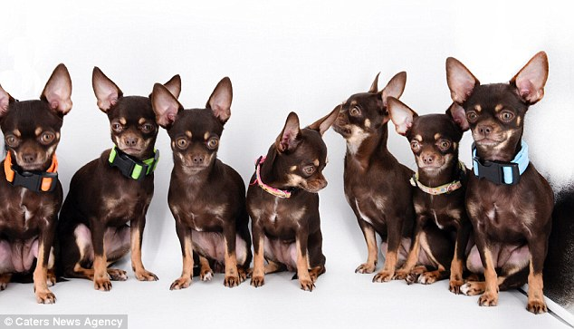 собака.пес,домашнее животное,щенок,пес