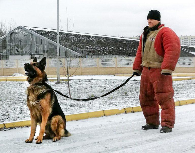 собака,пес,домашнее животное.овчарка,кинолог