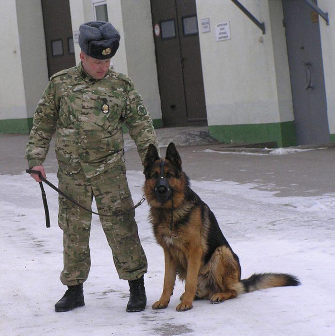 пес,собака,домашнее животное,овчарка,кинолог
