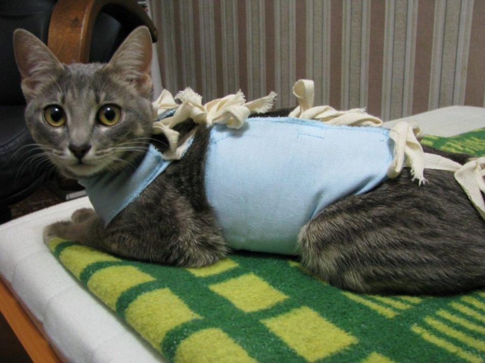 Кошка в попоне после стерилизации фото