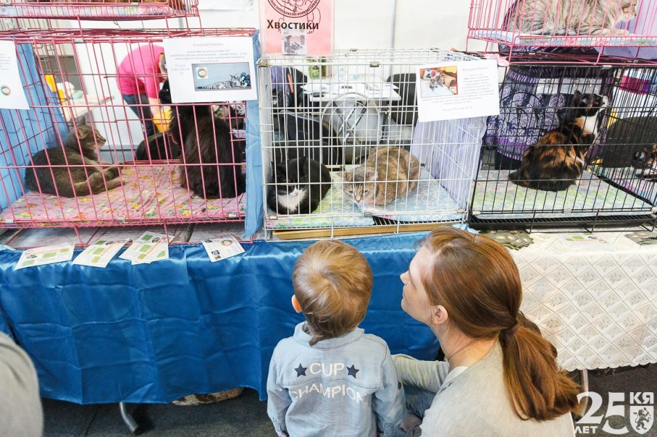 ребенок и мама, кошки, кошки в клетке
