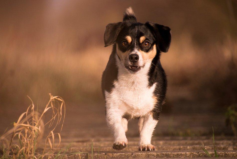 Как выбрать собаку в приюте фото