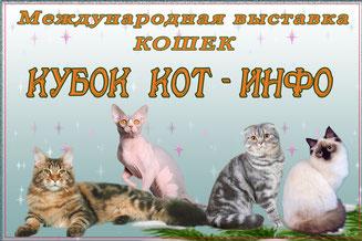 Международная выставка кошек. Летний Кубок КОТ-ИНФО