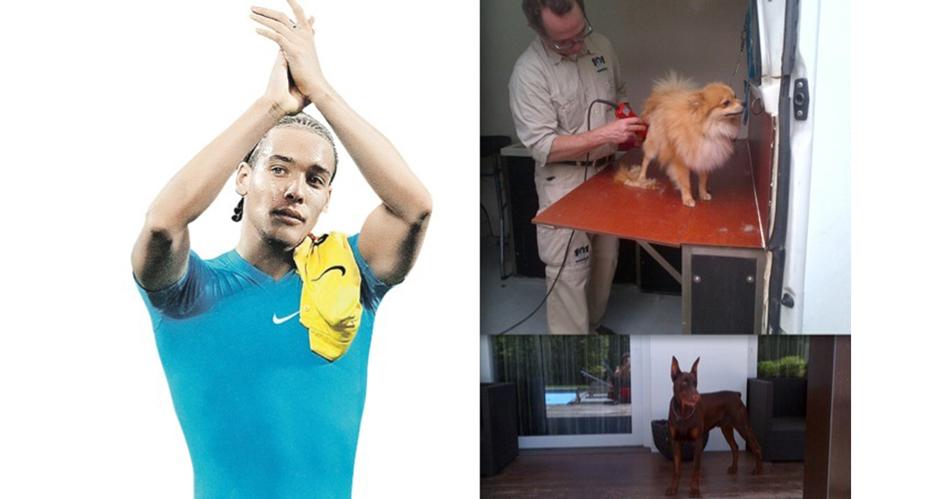Аксель Витсель и его собаки