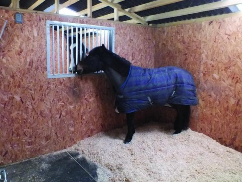 Подстилка для лошади: опилки и резиновые маты фото