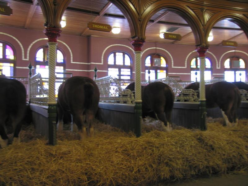 Подстилка для лошади солома фото
