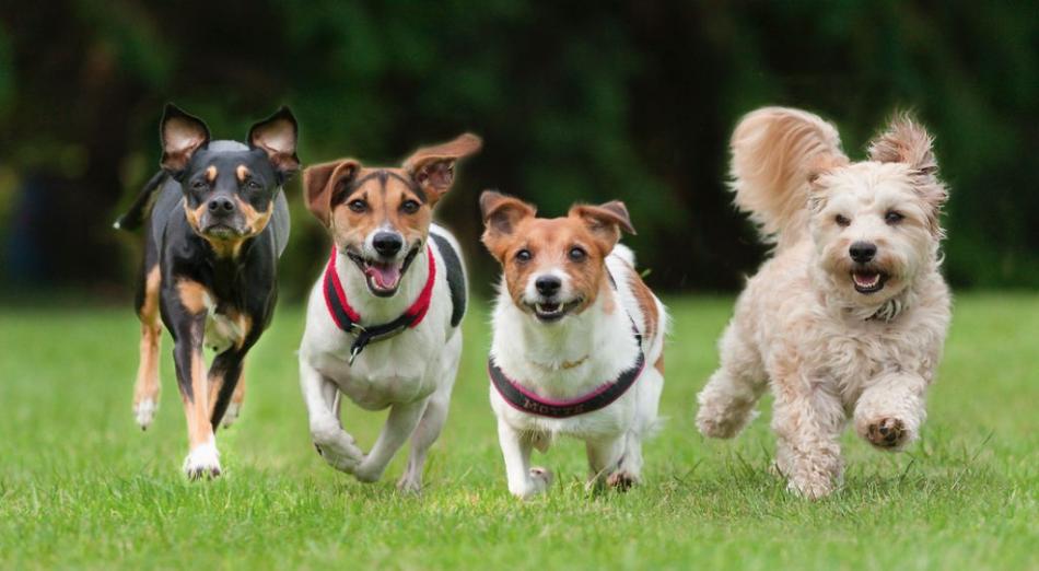 Собаки разных пород бегут по траве фото