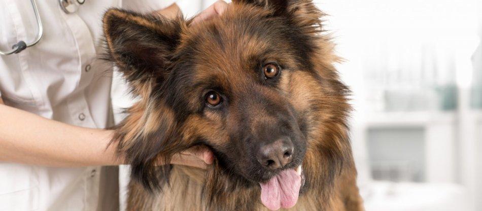 Стерилизация собаки фото